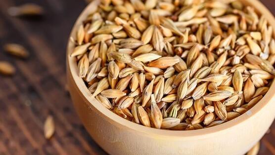 安海斯-布希投资1亿美元改造用于酿造啤酒的大麦