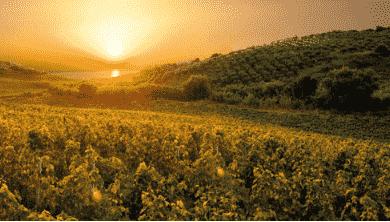 奇洛葡萄酒是卡拉布里亚最古老最著名的葡萄酒
