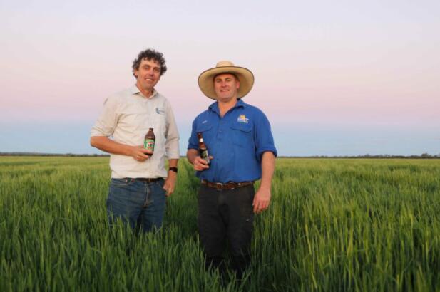 朝日饮料使用可追溯的澳大利亚大麦酿造啤酒