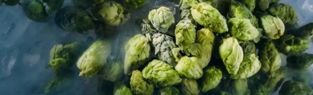 原浆啤酒:冷冻新鲜啤酒花诞生,曾经的行业难题也许有解了
